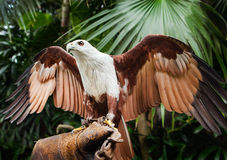Falcon sitting on gloved hand of handler Stock Photo