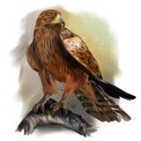 Falcon sitting on a snag. Watercolor painting Royalty Free Stock Photos