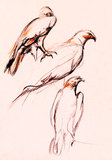 Falcon sketch Royalty Free Stock Photos