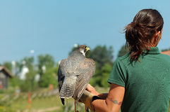 Falconer Stock Images