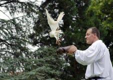 falconer Imagens de Stock Royalty Free