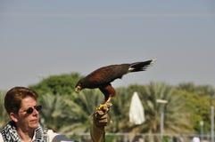 falconer stock afbeeldingen