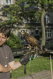 Falconer with falcon. Falconer with his falcon on picnic in ocassion Dragon Parade in Krakow , Poland . Europe Royalty Free Stock Photo