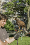 Falconer with falcon. Falconer with his falcon on picnic in ocassion Dragon Parade in Krakow , Poland . Europe Royalty Free Stock Image