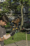 Falconer with falcon Stock Photography