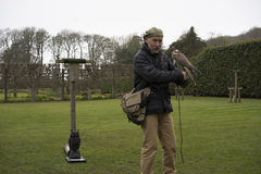 Falconer with hooded falcon - Dunrobin Castle Stock Images
