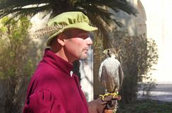 Falconer speaking with his peregrine, at the Upper Barraca Garde Stock Photography