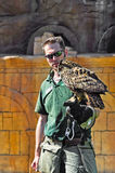 Falconer takes an owl on his gauntlet Royalty Free Stock Images