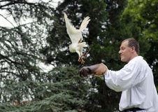 Falconer. Trezzo sullAdda, Italy, June 22nd, 2014: Man falconer holding a owl on his arm at the Falconeria(Medieval Festival) demonstration Royalty Free Stock Images