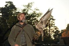 Falconiere con il falco, cherrug del falco. immagini stock libere da diritti