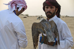 Falconry Stock Images