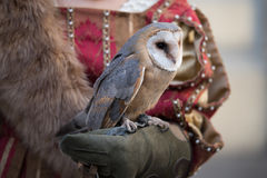 Falconry display Stock Photography