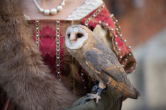 Falconry display Royalty Free Stock Photos