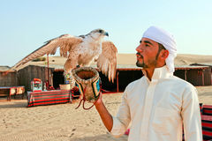 Falconry Expert Falcon Dubai United Arab Emirates. DUBAI, UNITED ARAB EMIRATES - JUNE 21, 2015: Falconry expert holds a beautiful falcon with open wings in the Royalty Free Stock Photography