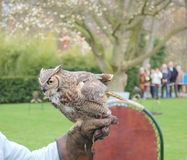 Falconry: Owl Royalty Free Stock Images