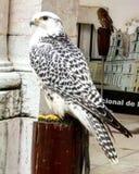 Falconry. Portuguese Falconry at Mafra& x27;s Palace stock photo