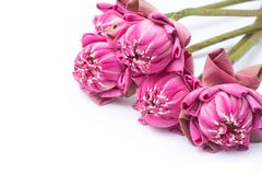Falcowanie lotosowy tajlandzki styl zdjęcie royalty free