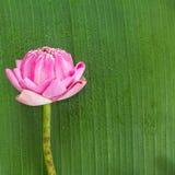 Falcowanie lotosowy tajlandzki styl obrazy royalty free