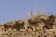 faleza gniazduje dymówka piaskowatego wierzchołek Obrazy Stock