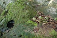 Falezy Odgórny miejsce pochówku Borneo fotografia stock
