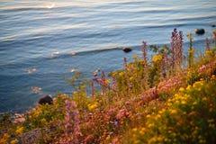 Falezy przy wybrzeżem w Paldiski Obraz Royalty Free