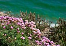 falezy szmaragdowych kwiatów różowy morze zdjęcia royalty free