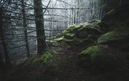 Falezy z mech w sosna lesie Obraz Stock