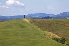 Faliści wzgórza Siena Crete, Tuscany Zdjęcia Royalty Free