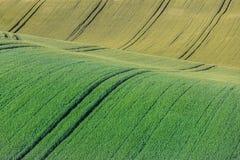 Falisty abstrakt barwiący krajobraz zdjęcia stock