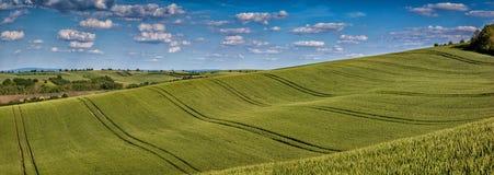 Falisty bajki wiosny krajobraz z polami banatka i niebo Fotografia Royalty Free