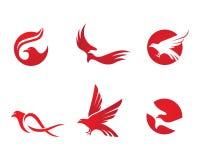 Falk Logo Template Royaltyfri Fotografi
