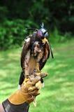 Falk med förlagehanteraren arkivfoto