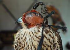 Falk med maskeringen Arkivbilder