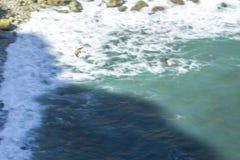 Falk som flyger över uddeEspichel klippor, Sesimbra, Portugal Arkivfoton