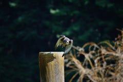 Falk som tar av royaltyfri bild