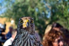 Falke in einem mittelalterlichen Festival in einer Marmantile-Stadt Lizenzfreie Stockbilder