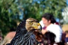 Falke in einem mittelalterlichen Festival in einer Marmantile-Stadt Lizenzfreies Stockbild