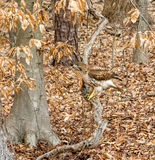 Falke gehockt auf Baum Lizenzfreies Stockbild