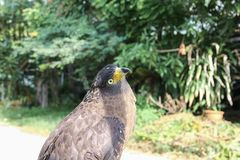 Falke oder Adler, Nahaufnahme Stockfotos
