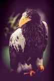 Falke und Eagle Lizenzfreie Stockfotografie