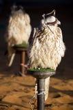 Falken stockbilder