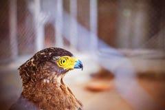 Falken im Zoo Stockfotos
