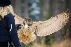 Falkenerareflickan från baksida med järnhandske- och landningflygeurasianen Eagle Owl övervintrar skogen Royaltyfri Fotografi