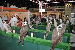Falkeshow an Abu Dhabi International Hunting und an der Reiterausstellung (ADIHEX) Lizenzfreie Stockbilder