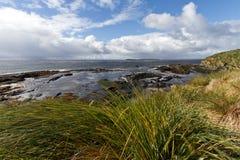 Falkland Island Coastline Imagen de archivo libre de regalías