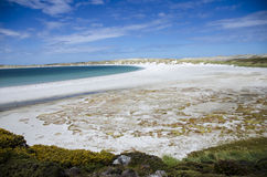 FALKLAND ISLANDS BEACH Royalty Free Stock Photo