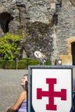 Falknereishow am Schloss der Fleischbr?he, Belgien stockfotografie