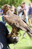 Falknertrainer mit Eagle mit einem Schnabel und hellen Augen Stockfotos