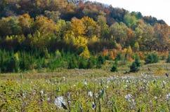 Fall& x27 ζωηρόχρωμα δέντρα του s Στοκ εικόνες με δικαίωμα ελεύθερης χρήσης