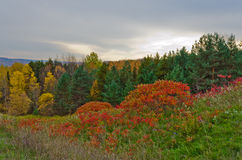 Fall& x27 ζωηρόχρωμα δέντρα του s Στοκ Εικόνα